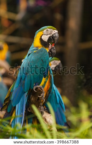 Macaw birds - stock photo