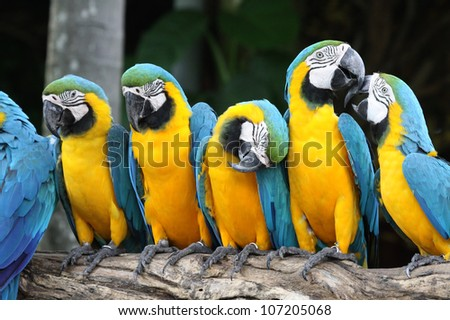 Macaw colorful - stock photo