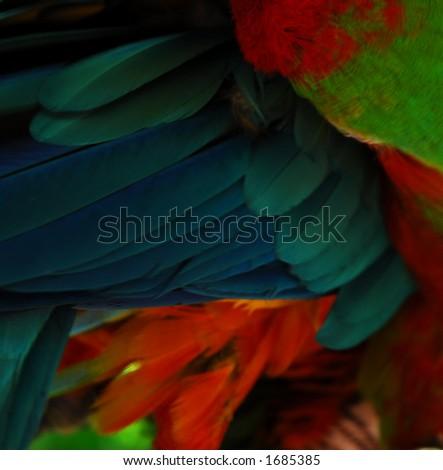 Macaw grooming - stock photo