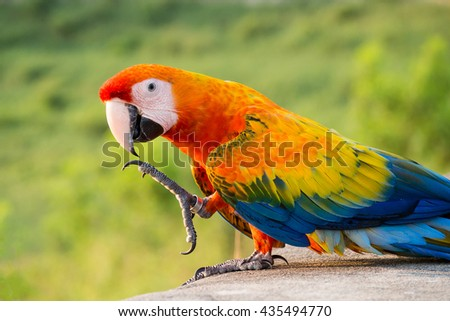 macaw in natural background. bird in natural background. parrot in natural background. Portrait macaw - stock photo
