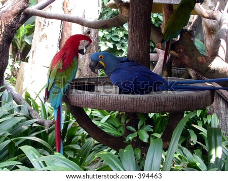 Macaw meeting
