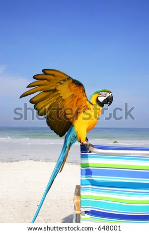 Macaw on the beach