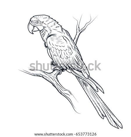 Macaw Parrot Ara Illustration Coloring Page Stock Illustration ...