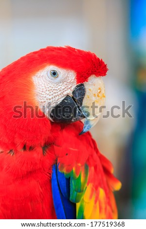 macaw parrot beautiful