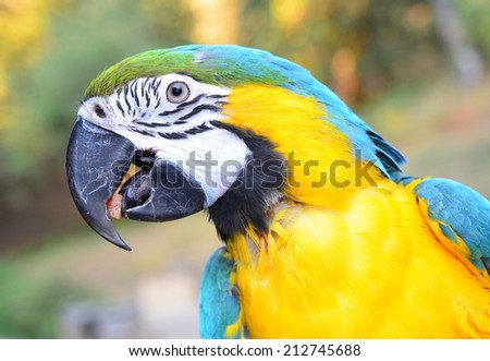 Macaw Parrot eating . Parrot