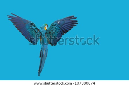 Macaw parrot flying isolated on blue - stock photo