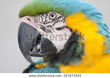 Macaw parrot head close-up - stock photo