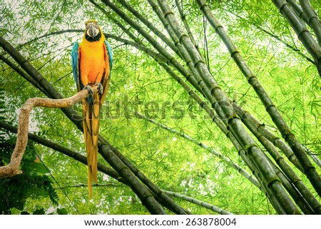 Macaw parrot in a rain forest