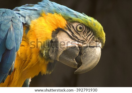 Macaw parrot in a zoo - stock photo
