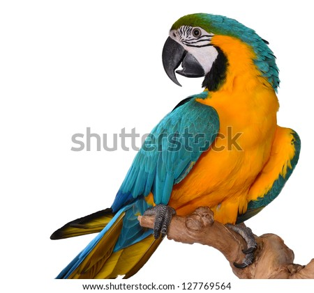 Macaw Parrot isolated on white - stock photo