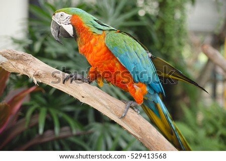 Macaw parrot standing on the tree.