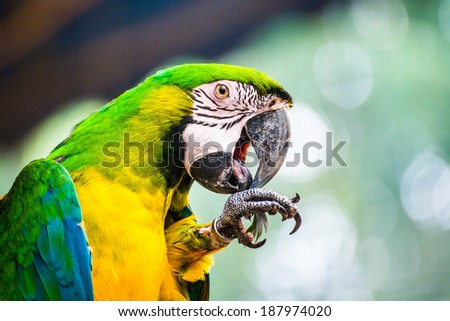 macaw parrots natural background - stock photo