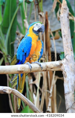 Macaw sitting on branch in chiangmai zoo, Thailand.