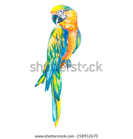 Macaw. Tropical parrot. Exotic. - stock photo