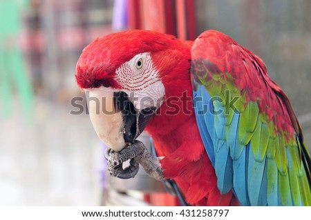 Macaws, close-up, taken in the tangshan phoenix flower