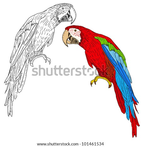 Macaws.  illustration. - stock photo