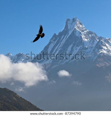 Machhapuchre at sunrise and black bird - Nepal, Himalayas - stock photo