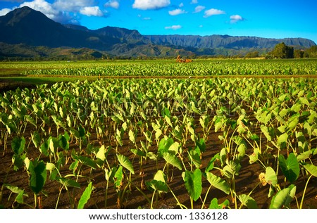 Machine in Taro fields on Kauai Hawaii. More with keyword Series001B. - stock photo