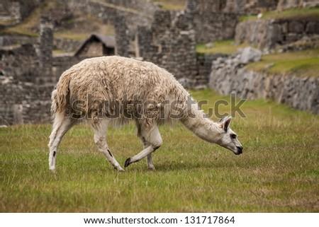 Machu Picchu, cuzco, Peru,  new seven wonder of the world - stock photo
