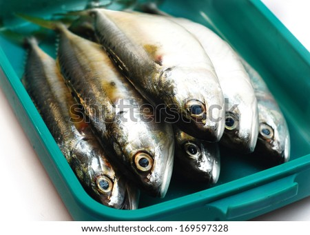 Mackerel fish in a box container - stock photo
