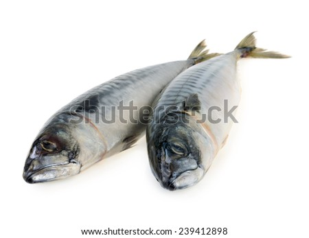 mackerel fish isolated - stock photo