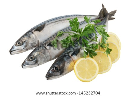 Mackerel Fish (Scomber scrombrus) isolated on white background