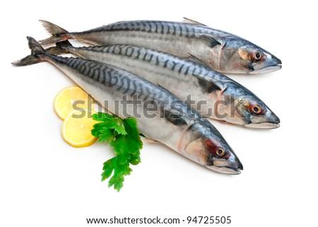 Mackerel Fish (Scomber scrombrus)  over  white background - stock photo