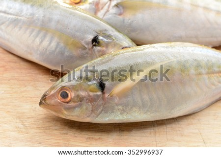 Mackerel on the wooden floor