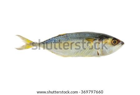Mackerel or Aji fish isolated on white background ( Japanese horse mackerel /Trachurus japonicus ) - stock photo