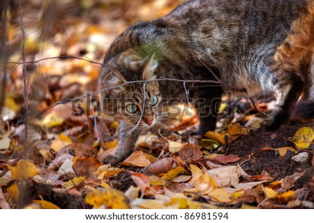 Mackerel tabby cat with green eye in autumn leaves