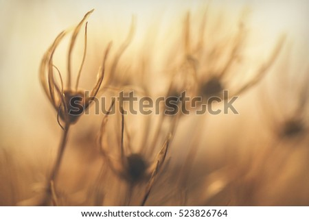 Macro Abstract blurry nature,  Defocused Meadow Salsify