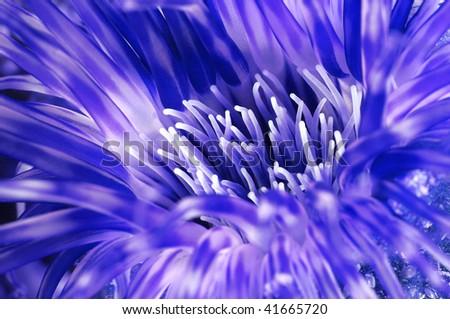 Macro abstract photo of an underwater anemone - stock photo