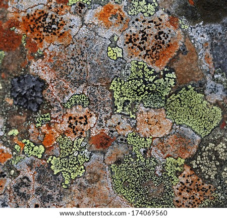 macro amazing beautiful moss on the rocks in the mountains of East Sayan - stock photo