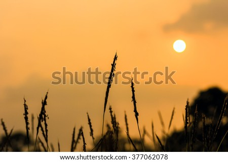 Macro Backdrop sunset silhouette grass Flowers