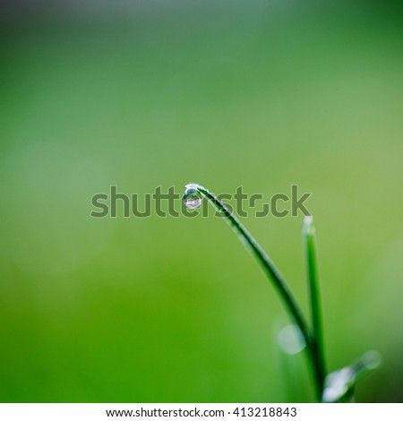 Macro. Background, water drops on the green grass.