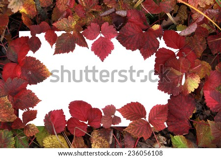 macro beautiful multi-colored autumn leaves on a white background - stock photo