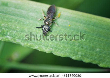 macro beetle insect wild nature background texture
