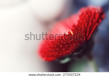 macro big red flower - stock photo