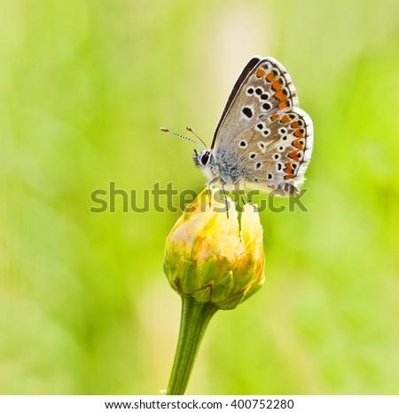 macro butterfly - stock photo
