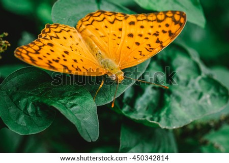macro butterfly on flower in tropical garden of thailand. Image is vintage effect and low light photo - stock photo