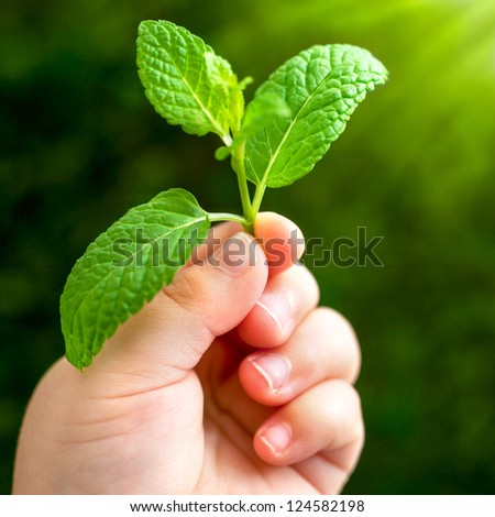 Macro close up of baby hand holding small green leaf. - stock photo