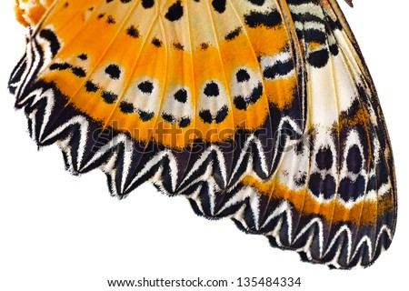 Macro close up of butterfly wing - stock photo