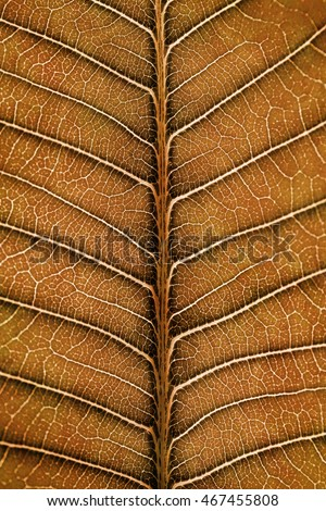 Macro Close Up of  Natural Dried Leaf  Background