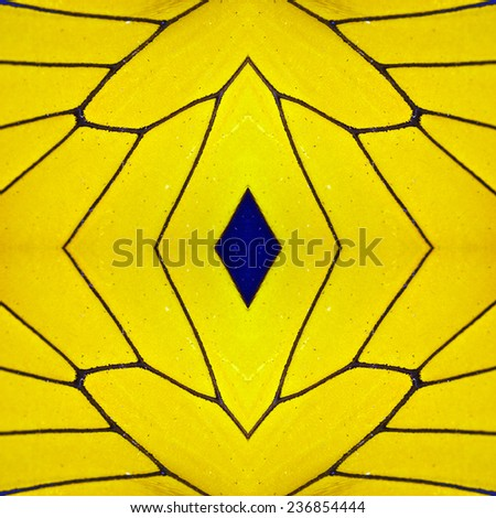 Macro close up of yellow Butterfly Wing - stock photo