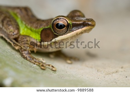Macro/close-up shot of a frog