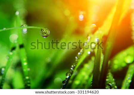 Macro closeup detail of water drop on green leaf or plant. Clear rain. - stock photo
