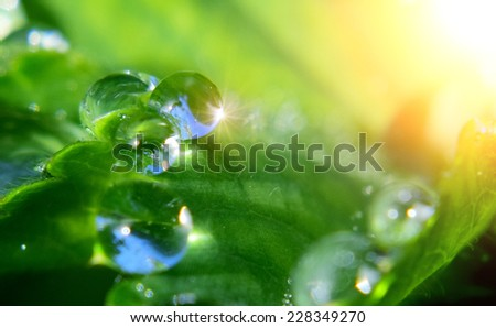 Macro closeup detail of water drop on green leaf or plant. With sun flares. - stock photo