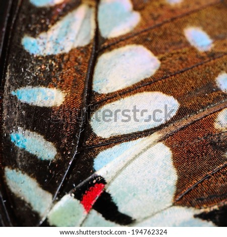 Macro closeup of butterfly wing background pattern