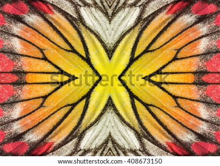 Macro closeup of butterfly wing background pattern - stock photo