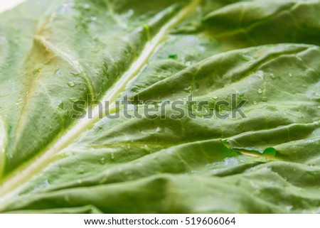 Macro closeup of fresh green chard leaf with water droplets and natural light